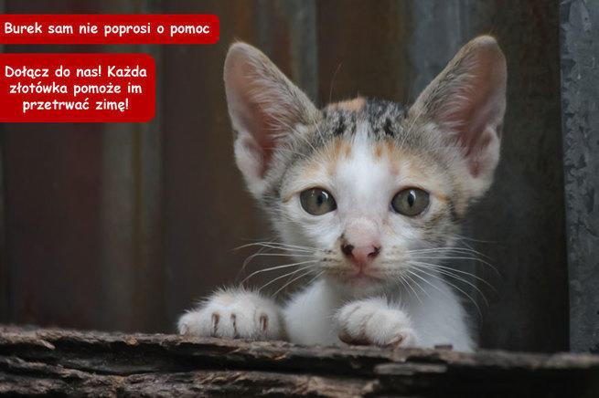 """Nasze Koty Fundacja """"Na Zdrowie"""""""