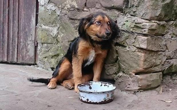 Fundacja Psi Los