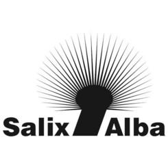 Salix Alba Wojciech Łopatka