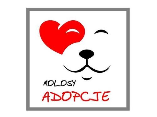 Fundacja Molosy Adopcje