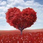 Fundacja ,,Pomagamy sercem''